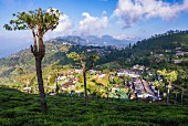 The town of Haputale seen from a tea plantation, Sri Lanka Hill Country, Nuwara Eliya, Sri Lanka