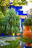 A pond in the in the Jardin Majorelle in Marrakesh in the garden created by the French artist Jacques Majorelle in 1923 using his trademark shade of blue