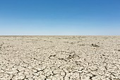A salt pan in the Etosha National Park, Namibia
