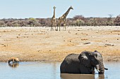 An elephant, hyenas and giraffe at the Chudop watering hole near Namutoni Camp, in Etosha National Park, Namibia