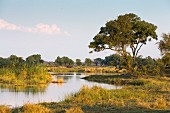The Kwando River flowing through the Caprivi belt, Namibia