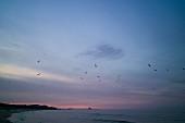 Vögel über den Ostsee in Abenddämmerung, im Hintergrund die Seebrücke in Heringsdorf, Usedom