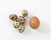 Quail's eggs and a hen's egg