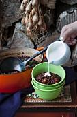Linsen-Rote Bete-Eintopf mit Lauchzwiebeln und Sauerrahm