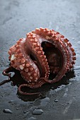 Octopus on a black surface