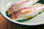 Fresh red mullet on an enamel plate