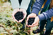 Two people holding freshly picked blackberries in their hands