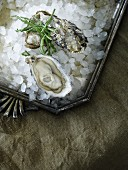 Fresh oysters with glasswort on crushed ice