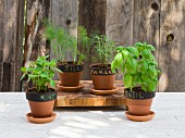 Various types of herbs in flower pots (mint, basil, dill and rosemary) with labels