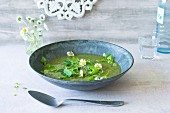 Wild herb soup with daisies