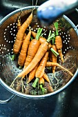Freshly washed carrots in a colander