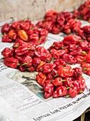 Red peppers at a local market in Dar es Salaam, Tanzania