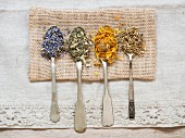 Dried medicinal herbs: lavender (lavandula), meadowsweet (filipendula ulmaria), agrimony (agrimoniae herba) and marigold (calendula officinalis) on silver spoons