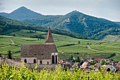 A view of Hunnawihr with the three castles of Ribeauvillé on the mountains in the background, Alsatian wine route