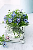 Borage in a jar of water