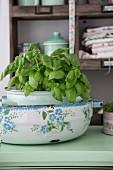 Basilikum in Vintage-Emailletöpfen auf Küchenanrichte