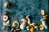 Still Life: Assorted Mushrooms
