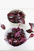 Bowls of beetroot leaves