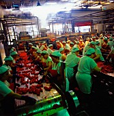 Workers in a tomato factory