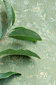 A sprig of tea leave on a green embroidered tablecloth