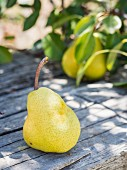A yellow pear on a wooden bench