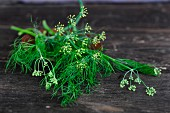 Fresh dill on a wood background