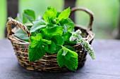 A basket of fresh mint