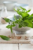 Fresh basil leaves in a colander with pine nuts and garlic