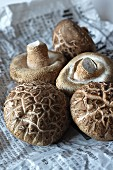 Fresh shiitake mushrooms from a market