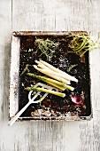 Asparagus on a baking tray