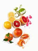 Verschiedene Zitrusfrüchte auf weisser Oberfläche
