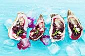 Austern mit Rote-Bete-Salsa