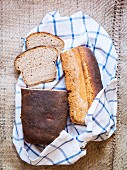 Two loaves of homemade sourdough rye bread on a checked tea towel