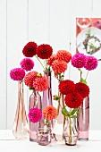Pompondahlienblüten in verschiedenen Glasvasen