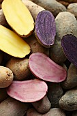 Various potato varieties