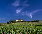 Old farm buildings amongst vineyards. East of Marsala, Trapani province, Sicily. [DOC Marsala]