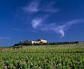 Alte Bauerngehöfte inmitten von Weinbergen im Osten von Marsala, Provinz Trapani, Sizilien
