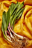 Fresh wild leek on a yellow cloth