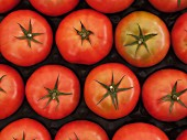 Rows of tomatoes in a plastic box