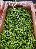 Pea sprouts at an organic farmers market