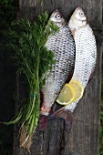 Two fresh carp with dill and lemons