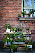 Plant stand made from pallet against house façade
