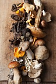 An arrangement of various mushrooms