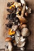 An arrangement of various mushrooms