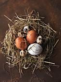 Stillleben mit verschiedenen Eiersorten in Nest aus Heu