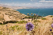 The Sea of Galilee: popular with hikers, pilgrims and water sports fans
