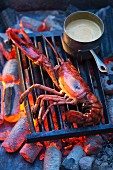 Grilled lobster with sauce