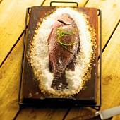 Ganzer Snapper gebacken in Salzbett auf Zedernholz