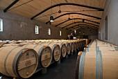 Barriquefässer im Weinkeller des Chateau Palmer (Bordeaux, Frankreich)