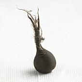 A black radish